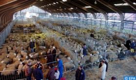 حظر الذبح بدون تخدير يسائل التعدد الديني والثقافي في بلجيكا