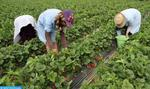 Morocco, Spain Determined to Improve Recruitment Process of Moroccan Seasonal Female Workers (Statement)
