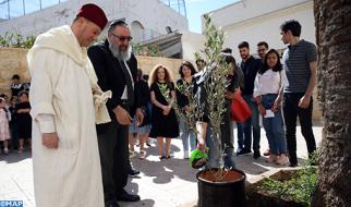 """Casablanca: jóvenes musulmanes plantan """"un olivo de fraternidad"""" en una sinagoga, iglesia y mezquita"""