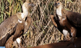 El Zoológico de Rabat registra en 2019 el nacimiento de más de 150 animales, entre ellos especies en peligro de extinción