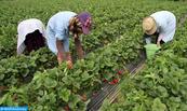 Exploitations agricoles espagnoles: Le ministère de l'Emploi et de l'Insertion professionnelle confirme qu'aucune violation à l'égard des ouvrières marocaines n'a été enregistrée