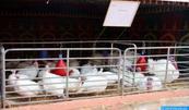 Importations de viandes de volaille en provenance des Etats-Unis: Les contingents négociés portent uniquement sur les produits de volailles congelés