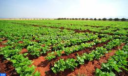 Tous les produits agricoles provenant de la province de Chichaoua répondent aux standards de qualité