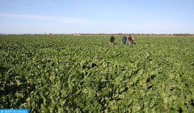 La reconnaissance par le FAO du PMV comme modèle de développement agricole conforte le Maroc dans sa coopération avec ses partenaires africains