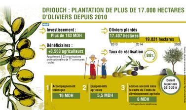 Driouch : plantation de plus de 17.000 hectares d'oliviers depuis 2010