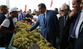 Bouznika : Le festival du raisin souffle sa 12ème bougie