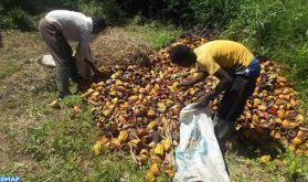 Les résidus du cacao, combustible alternatif en Côte d'Ivoire