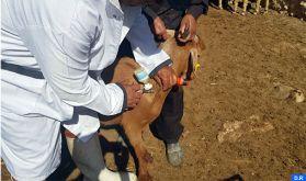 Fièvre aphteuse : Plus d'un million de bovins et 17 millions d'ovins et de caprins vaccinés (ONSSA)