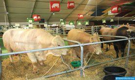 Fièvre aphteuse: le Programme national de lutte se poursuit pour les bovins et s'étend aux ovins et caprins (ONSSA)