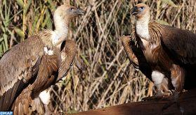 Jardin Zoologique de Rabat: Naissance en 2019 de plus de 150 animaux dont des espèces menacées d'extinction