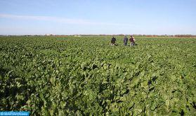 Doukkala: une campagne agricole globalement satisfaisante