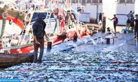 ارتفاع قيمة منتجات الصيد الساحلي والتقليدي المسوقة بميناء آسفي بـ29 في المائة عند متم شتنبر الماضي
