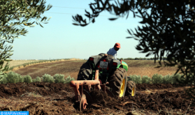 تعبئة الأراضي الجماعية، مفتاح التنمية القروية
