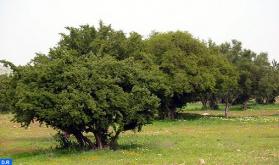 المديرية الإقليمية للتربية الوطنية بمراكش تحتفي باليوم العالمي لشجرة الأركان