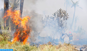 Fire Contained after Destroying 54 Hectares of Vegetation in Al-Haouz Region