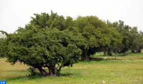 Protecting Argane Tree Mitigates Effects of Climate Change (GCF Executive Director)