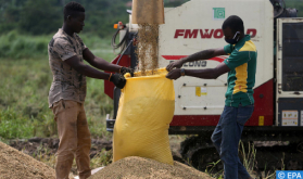 IFC, OCP Africa Join Efforts to Strengthen Rice Sectors in Côte d'Ivoire and Millet in Senegal