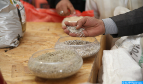 Campaña agrícola 2020-2021: El OCP lanza la fase II del programa Al Mutmir de siembra directa