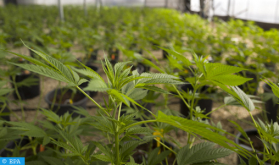 Firmados en Tánger 4 convenios de asociación para reforzar la investigación científica sobre el cannabis