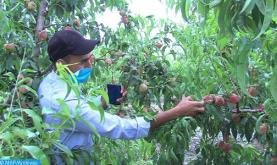Tormenta de granizo en la región de Fez-Mequínez: Programadas varias medidas para apoyar a los agricultores afectados