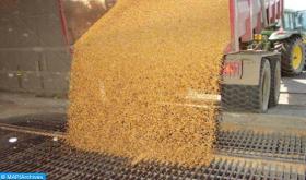Cereales de otoño: 4,1 millones de hectáreas sembradas al 08 de enero (ministerio)
