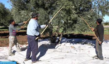 Ouverture à Guercif du 2ème Salon régional des olives, plus de 50.000 visiteurs attendus