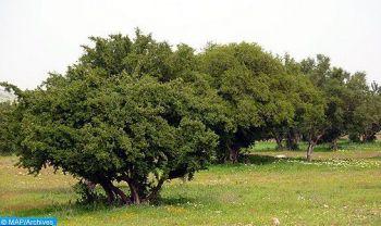 L'Arganier, arbre endémique du Maroc, au centre de l'attention de l'Assemblée générale des Nations-Unies