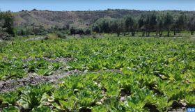 Tanger-Tétouan-Al Hoceima: Plus de 770.000 tonnes de légumes attendues pour la saison agricole 2019-2020