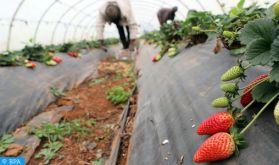 La crise du secteur agricole secoue l'Espagne