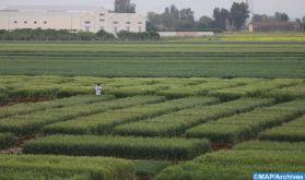 Innovation agricole: l'expérience marocaine mise en avant à Rome