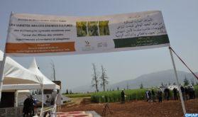 Fqih Ben Salah : l'INRA décline ses nouvelles variétés de céréales et légumineuses