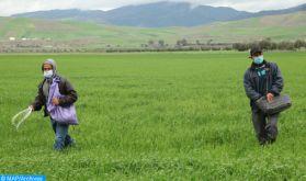 El Jadida : Les fortes précipitations ravivent l'espoir des agriculteurs