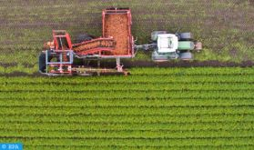 Agriculture au Maroc : Faux-bond climatique, quel constat et quelles mesures ?