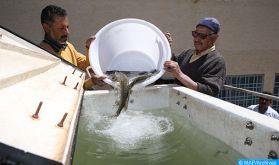 Lancement d'un projet d'appui au développement des métiers d'aquaculture au Maroc de 2,5 millions de dollars