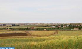 Berrechid: Une saison agricole prometteuse
