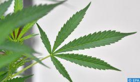 Un webinaire examine les aspects médicaux et scientifiques du cannabis