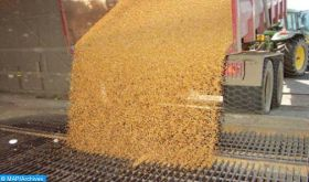 Campagne agricole 2019-2020: production céréalière estimée à 30 millions de quintaux