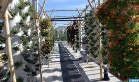 En plein cœur de Paris, une ferme urbaine en toiture, la plus grande d'Europe