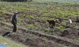 A El Hajeb, l'activité agricole se poursuit malgré le contexte du Covid-19