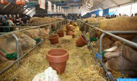 Région de Marrakech-Safi : Distribution de 495.000 quintaux d'orge subventionnée au profit des éleveurs