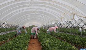 Démarrage de la saison agricole de cueillette des fruits rouges à Huelva