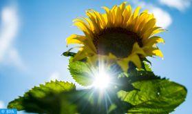 Temps chaud du lundi au mercredi dans plusieurs provinces du Royaume (bulletin spécial)