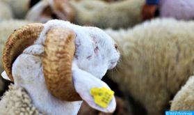 Aid Al Adha 1442: la fête de sacrifice s'est déroulée dans de bonnes conditions d'hygiène et de santé animale (ONSSA)